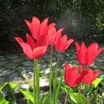 Garten Haus Klarblick
